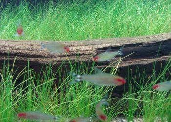 Detailansicht des Aquariums